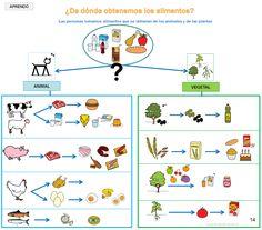 """Proyecto """"Los alimentos"""" : buscamos, observamos, clasificamos y elaboramos. Organizadores gráficos para aprendizaje y repaso de contenidos curriculares: mapas conceptuales, esquemas, diagramas y fichas-guión para búsqueda y recogida de información, con apoyo de pictogramas. Animal Projects, Spanish Language, Social Science, Science And Nature, Kids Education, Healthy Habits, Healthy Recipes, Homeschool, Teaching"""