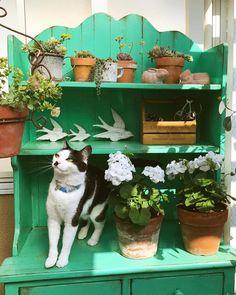 いいね!86件、コメント9件 ― hiromi_oさん(@chai.uoo)のInstagramアカウント: 「ガーデニング日和でした💚  #ベランダガーデン  #pottingbench  #succulentplants  #多肉植物 #ゼラニウム #gardening  #ガーデニング #cat…」