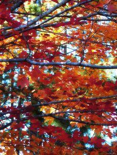 Fall ~ Upper Peninsula ~ U.P.