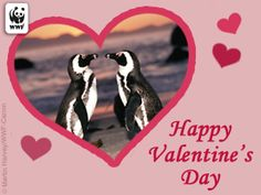 (World Wildlife Fund Animal E-Cards Board) Happy Valentine's Day!