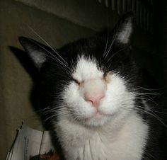 Gato Viño. Una historia que conmueve. Animals, Kittens For Adoption, Foot Prints, Historia, Gatos, Animales, Animaux, Animal, Animais