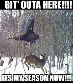 There are many reasons that a hunter would get seriously injured, but the leading cause is improper gun handling. Unfortunately, too many hunters ignore vital safety precautions when hunting and do not take good care of their weapon. Deer Hunting Memes, Funny Hunting Pics, Boar Hunting, Funny Deer, Turkey Hunting, Hunting Stuff, Deer Meme, Coyote Hunting, Pheasant Hunting