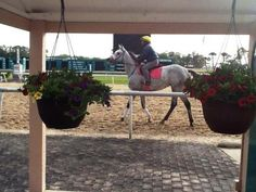 After a Tampa Bay Derby to remember, this Thoroughbred and rider take time to smell the flowers.