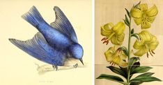 Over 150,000 incredible nature illustrations are available for free download thanks to the Biodiversity Heritage Library.