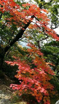 가을단풍^^