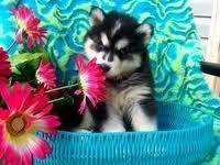 OMG- I want one