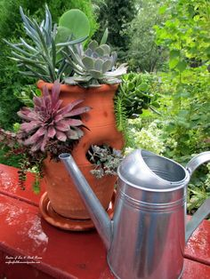 Succulent Strawberry Planter Pot  (Garden of Len & Barb Rosen)  www.facebook.com/OurFairfieldHomeAndGarden