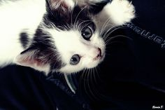 Little Kitty :)