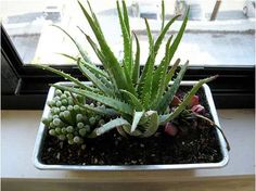 Flickr Find: Bread Pan as Succulent Planter