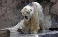 Там ходит чуткая цесарка, И попугай там говорит, Павлин, красавец зоопарка, Противным голосом визжит. http://lnk.al/5nFo