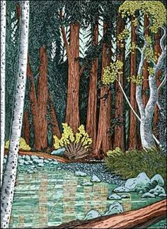 Muir Woods. Tom Killion.
