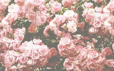 Pink And White Roses Tumblr Background 1 HD Wallpapers