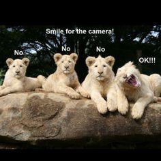 30 Funny animal captions - part 12 pics), animal memes, animal pictures with captions, funny memes, funny animals Funny Animal Quotes, Animal Jokes, Cute Funny Animals, Funny Animal Pictures, Cute Baby Animals, Funny Cute, Animals And Pets, Animal Pics, Funny Pics