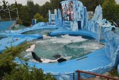 Killer whale in captivity is permanently bent from abuse.  Keep placing links to this story on facebook for anything in Argentina be it tourist pages, football teams, Government pages just keep posting the link. Let more people see the tragedy.