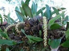 Rainforest Plants - Bing Images Rainforest Plants, Unusual Plants, Bing Images, Rare Plants