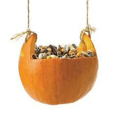 Coat the inside of a pumpkin with peanut butter and birdseed, then tie it to a tree with twine or wire.