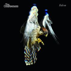 For their second album 'Falcon', The Courteeners commissioned Village Green to provide art direction, image making and design for album and single sleeves. The Courteeners, Rest Of The World, Best Albums, Poster Wall, Cool Bands, Art Direction, Album Covers, Good Music, Cool Things To Buy