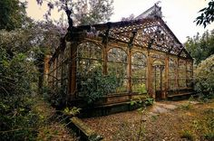 #steampunk style  Inside an abandoned greenhouse that is defiantly growing seemingly without human care.