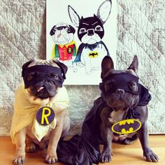 'Bat #pug & Bat Frenchie', Pug and French Bulldog in Costume, via Batpig & Me Tumble It