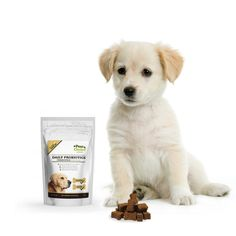 If probiotics populate our gut with good bacteria to digest food and strengthen our immune system, prebiotics – simply put – are the food for that good gut flora to thrive inside our bellies. Paw Choice dog probiotics, prebiotics
