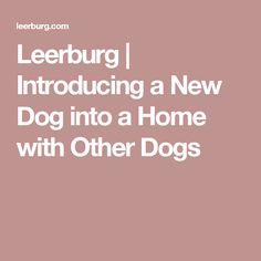 Leerburg | Introducing a New Dog into a Home with Other Dogs