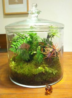 Huge Woodland Terrarium with Ferns and Air Plants by SweetDarias, $110.00