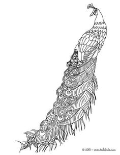 Peafowl to color in Peacock Coloring Pages, Butterfly Coloring Page, Bird Coloring Pages, Printable Coloring Pages, Adult Coloring Pages, Coloring Sheets, Coloring Books, Peacock Painting, Peacock Art