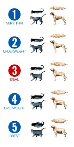 Obesity is a problem with our pets, learn what is normal and what is not.