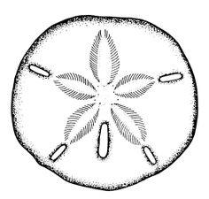Sand Dollar tattoo sketch by - Ranz | Pinterest