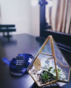 Geometric terrarium diamond glasses beauty n d beast concept (3 kinds of succulents.. roses look a like) for sell $35 kindly to contact at candylilo2292@gmail.com