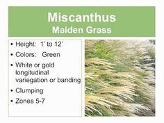 Types of Ornamental Grasses