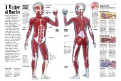 A Matter of Muscles - KIDS DISCOVER Muscles