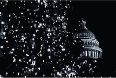 Capitol Christmas Tree Photo by @blushfilms #uscapitol #washingtondc #dc #capitolchristmastree #christmas #christmastree #lights