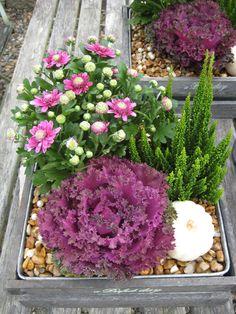 Stilren höstkruka Winter Container Gardening, Outside Planters, Ornamental Cabbage, Fall Containers, Ideas Prácticas, Garden Angels, Garden Yard Ideas, Herb Pots, Autumn Garden