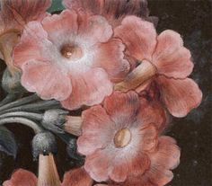 Detail of painting by Barbara Regina Dietzsch. Narcissus, Rose, Auricula, and Dragon Fly.