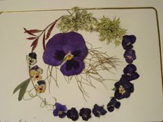 Blank Card Wreath of Real Pressed Flowers by TableauBotanique, $6.00
