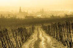 Modra by Martin Bibza Big Country, Lonely Planet, Homeland, Vineyard, Outdoor, Travel, Beautiful, Outdoors, Viajes