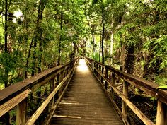 Bridge to the Wild is a bridge that runs off into the woods in the forest in Ocala, fl. There is no telling what lies at the end of the bridge, is there a wild animal waiting for you or is there a peaceful stream. MEMBER  Nichole Amy Photo