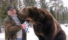 White Wolf : Bear Man Of Finland Has An Unbreakable Bond With Brown Bears (VIDEO)
