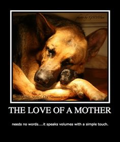 GSD Mommy & pup