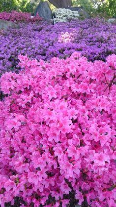 Primavera feliz