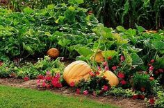 How to Guide for Rotating Crops in the Vegetable Garden thumbnail - http://www.ehow.com/how_4480241_guide-rotating-crops-vegetable-garden.html#