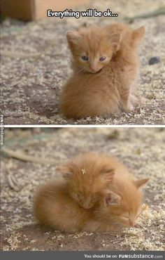 Welcome! Head over to: for regular updates with passion and dedication to our small #cat friends. Come share in our love for the little kitties!
