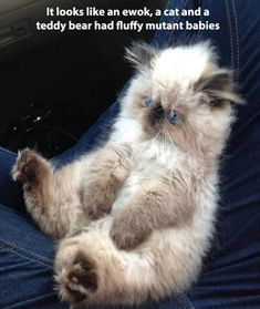 Adorable! I want one!   Dump A Day Beware Of Funny Animals! - 52 Pics