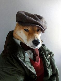 This is amazing - menswear dog blog