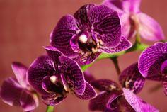 Pár egyszerű trükk betartásával sokáig virágozhat az orchidea Free Pictures, Free Images, Orchid Flower Plant, Wallpaper Backgrounds, Wallpapers, Planting Flowers, Seeds, Neon, Stock Photos