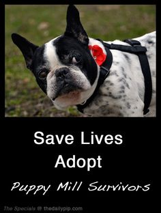 Tips For Adopting A Puppy Mill Dog