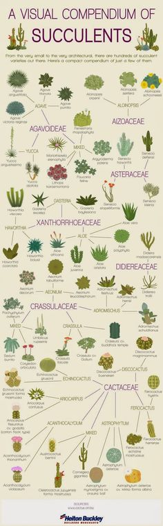 Serenity in the Garden: Succulents 101 - A Great Infographic