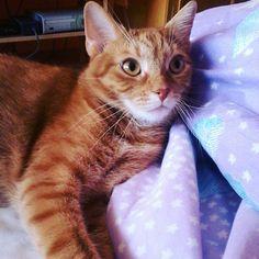 my beauty ❤ #cat #mycat #giselle