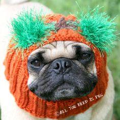 Dog Hat - Snuggly Pugkin Head Hat